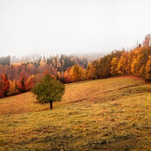 landscape-field-and-trees-3264706
