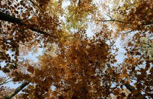 low-angle-photo-of-brown-leafed-trees-3149188